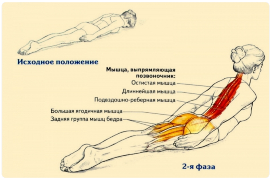 осанка1